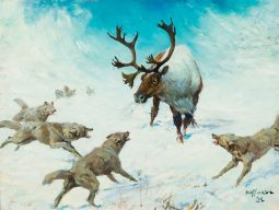 Wolves and Caribou
