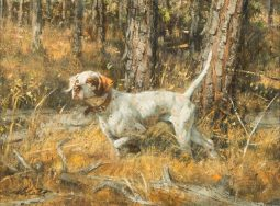 Pointer in the Pines