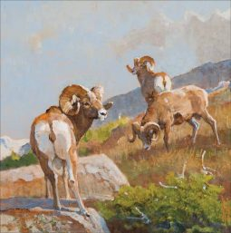 Rams on a Ridge