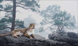 Mountain Lion in the Mist