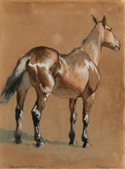 Study of Brown Horse